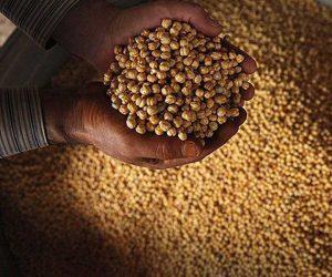 طرز تهیه نخودچی ممقان