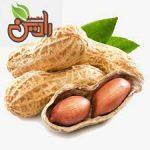 مرکز خرید بادام زمینی در تبریز