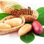 قیمت فروش بادام زمینی در تبریز